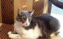 Kedinin İdrar Yolundan 16 Taş Çıkarıldı
