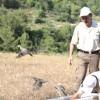 Kenelere Karşı 2 Bin Kınalı Keklik Doğaya Salındı