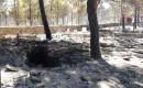 Mersinde Orman Yangını, 1 Mahalle Boşaltıldı (4)