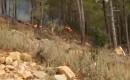 Orman Yangını (2)