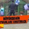 Kahramanmaraş Büyükşehir sokak hayvanlarını soğuktan koruyor