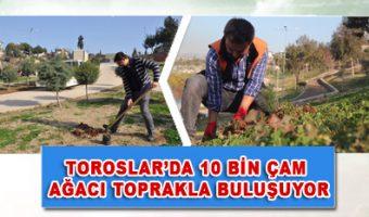 TOROSLAR'DA 10 BİN ÇAM AĞACI TOPRAKLA BULUŞUYOR